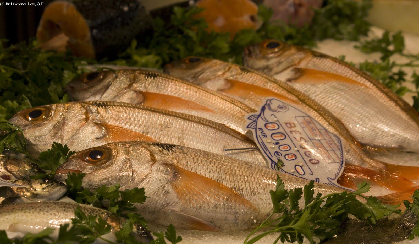 Resultado de imagem para Abstinência de Carne e não de peixe